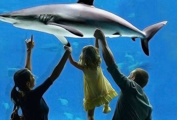 Adventure Aquarium's New Year's Eve celebration features events throughout the day. Photo courtesy of the aquarium