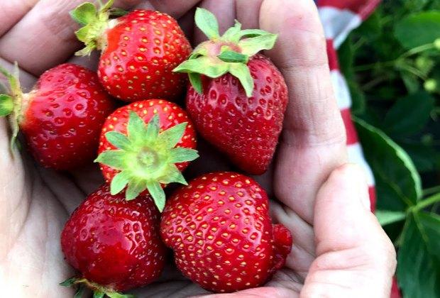 A handful of strawberries