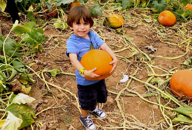 Get ready to haul home some hefty pumpkins from NJ farms. Photo courtesy of Alstede Farms