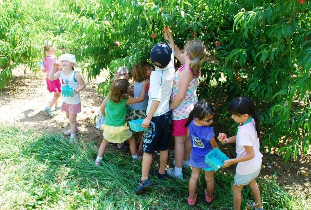 Don't miss the last weekend of Alstede Farms' Peach Harvest Festival. Photo courtesy of the farm