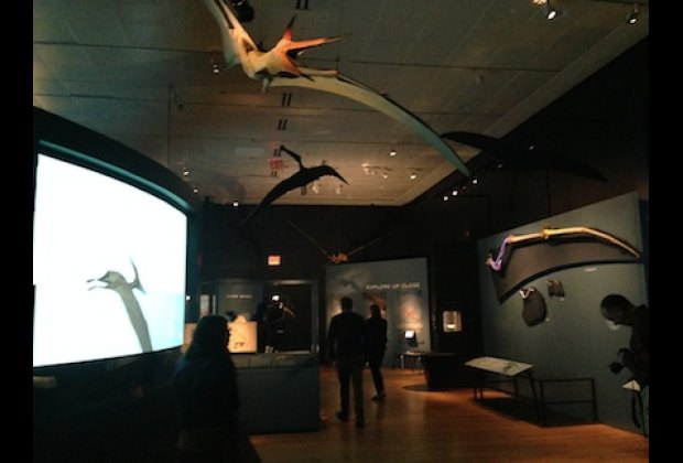 Remember to look up! Many pterosaurs are hanging from the ceiling