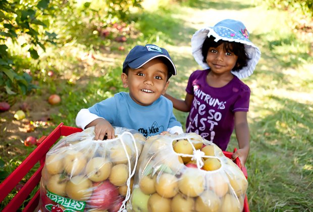 Kids can pick apples at Apple Holler from mid-August to November, just over an hour from Chicago.