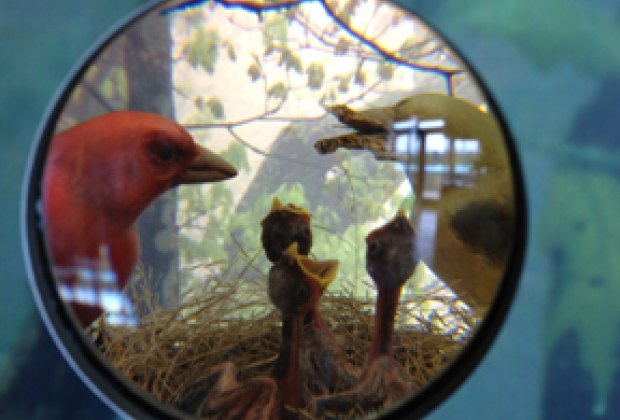 Tiny windows offer views of woodland creatures.