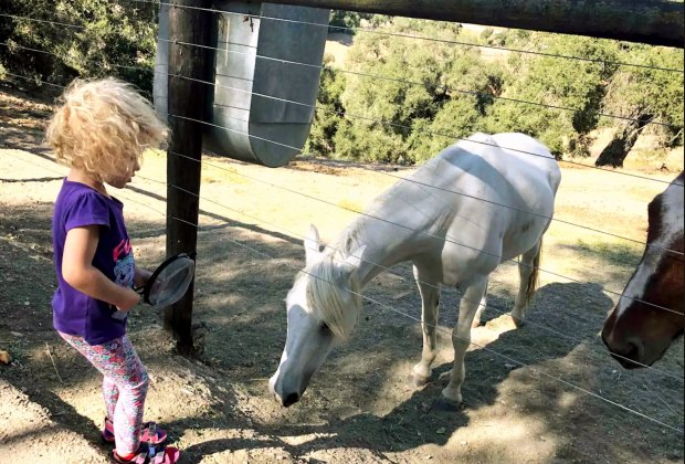 California Vacation Home Rentals for Families: Stay on a working horse ranch.