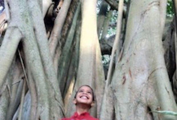 Admiring a banyan tree