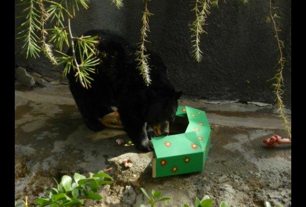 Bear got a present!
