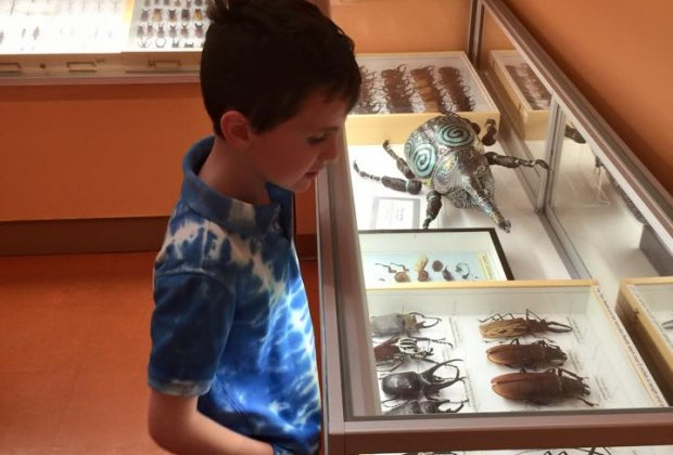 We stopped to admire some huge beetles