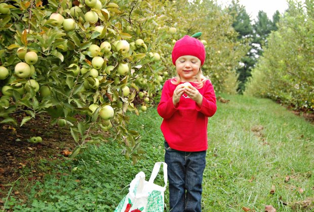 Photo courtesy of Butler's Orchard