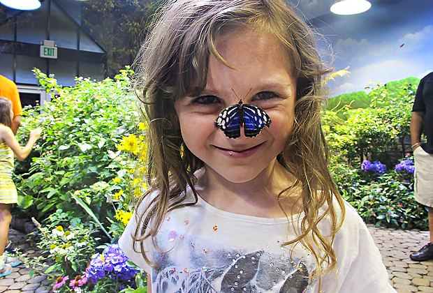It's always a blue sky in the butterfly house at the Long Island Aquarium. Photo courtesy of the aquarium