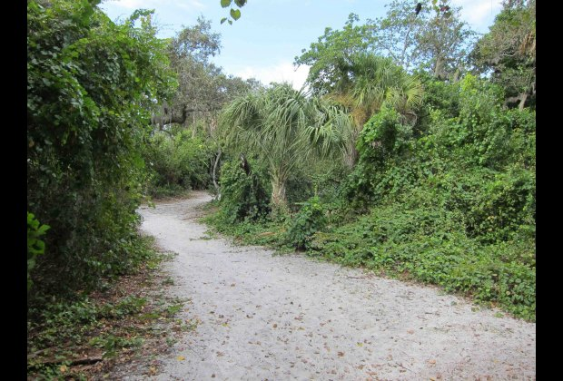 Cabbage Key nature trail