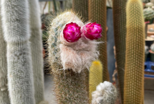 A Cactus with a friendly face from Cactus Store