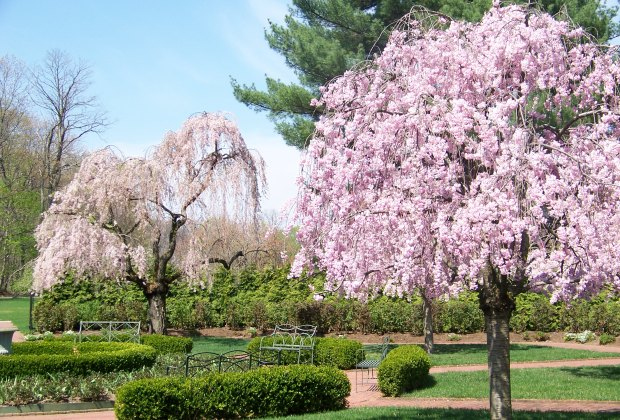 Where To See Cherry Blossoms In Westchester And The Lower Hudson Valley This Spring Mommypoppins Things To Do In Westchester With Kids