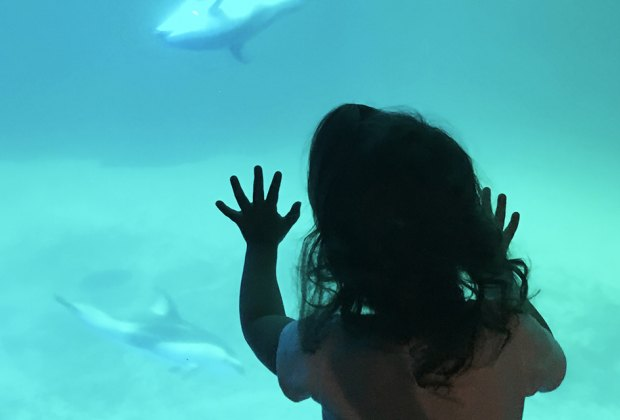 20 Things To Do with Chicago Babies Before They Turn One: Shedd Aquarium