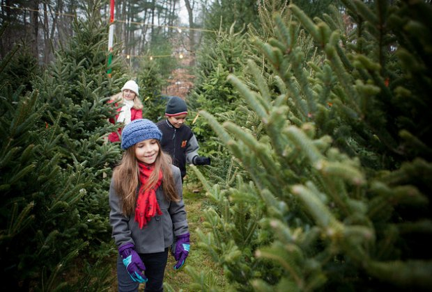 Christmas Tree Farms to Cut Your Own Near Boston | Mommy Poppins - Things To Do in Boston with Kids