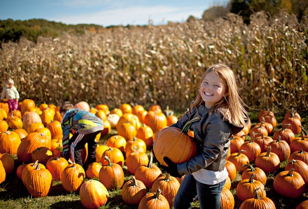 Find your perfect pumpkin at Cider Hills Farm Pumpkin Patch. Photo courtesy of Massachusetts Office of Travel & Tourism