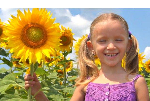 Photo courtesy of Country Barn Sunflower Festival