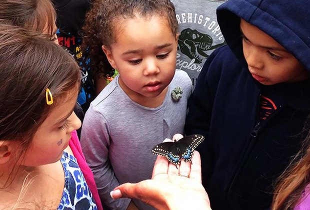 Experience the beauty of butterflies at the Center for Science Teaching & Learning.