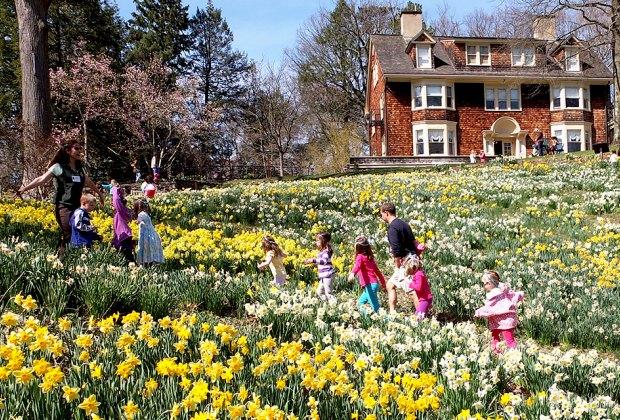 reeves reed arboretum daffodil day nj break staycation