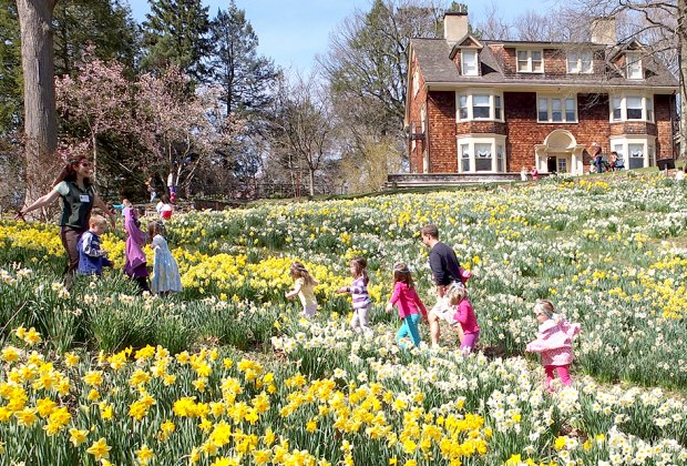 The hills come alive with daffodils at Reeves-Reed Arboretum in April. Photo courtesy of the arboretum