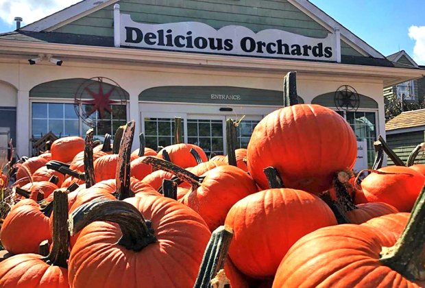 Enjoy FREE fall fun at Pumpkin Fest on Monday. Photo courtesy of the orchard