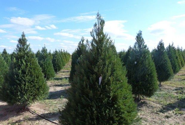Artificial Christmas Trees Houston