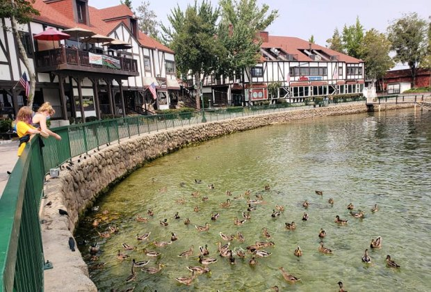 Best Things To Do with Kids in Lake Arrowhead: Feeding ducks at breakfast