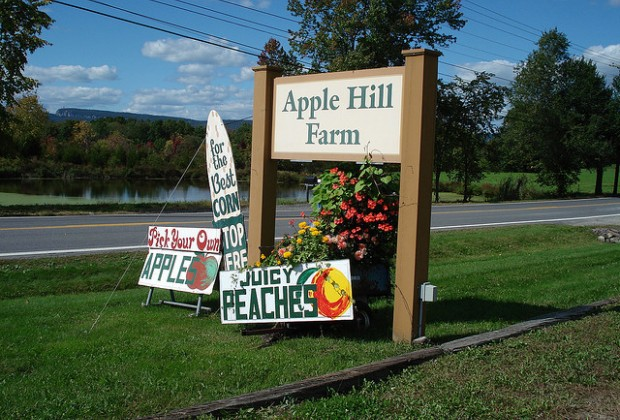 PIck your own fruits and vegetables at local farms