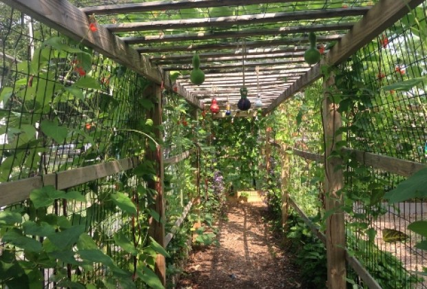 Walking through the gourd tunnel at the Urban Farm