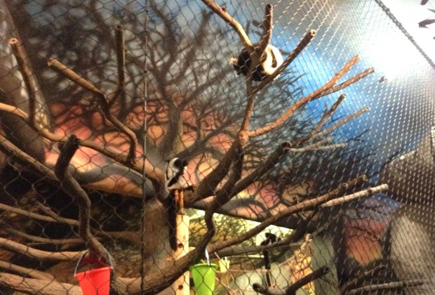 And the lemurs