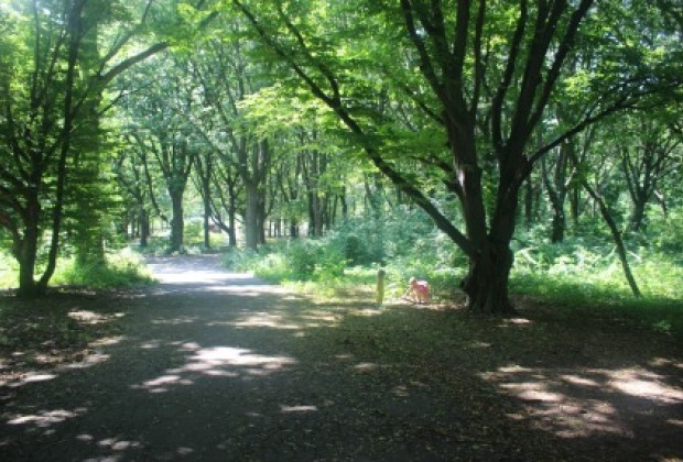 The 635-acre Alley Pond Park is a natural wonder with forests, meadows and wetlands