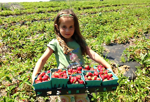 It's time for the strawberry festival  at Garden of Eve Organic Farm. Photo courtesy of the  farm