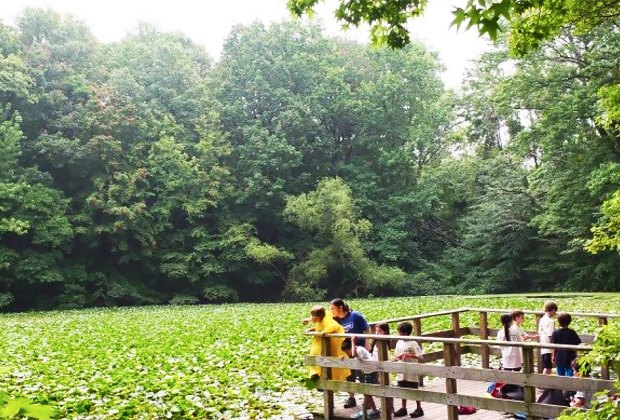 Take in the lush beauty of Staten Island's Greenbelt.