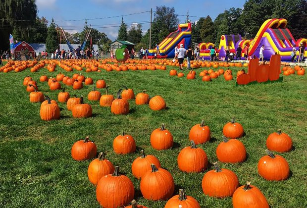 Stroll through the fields to find the perfect pumpkin at Harvest Moon Farm and Orchard. Photo courtesy of the farm