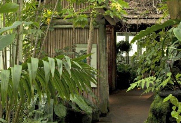 A Tropical Paradise at the New York Botanical Garden; photo: Ivo M. Vermeulen