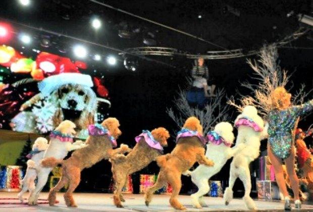 The talented dogs of Holiday Circus. Photo by Nikolai Komissarov