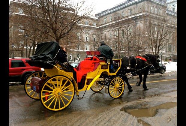 A romantic horse drawn carriage