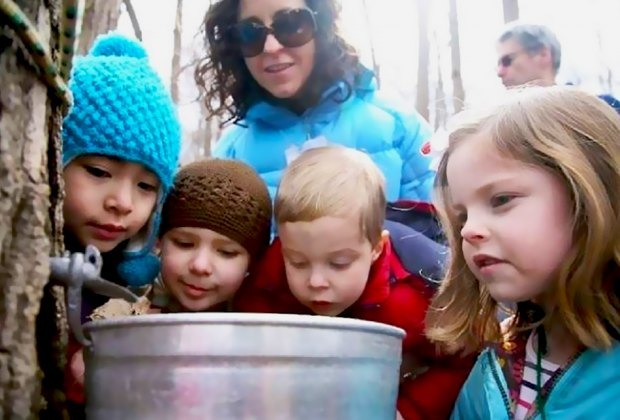 Learn how to tap a maple tree at the Hudson Highlands Nature Museum. Photo courtesy of Hudson Highlands