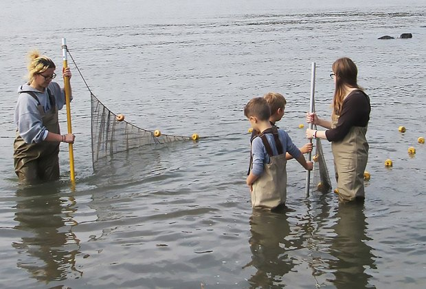 Wade into the river to catch and release critters at Hudson River family Seining. Photo courtesy of  the Center for the Urban River