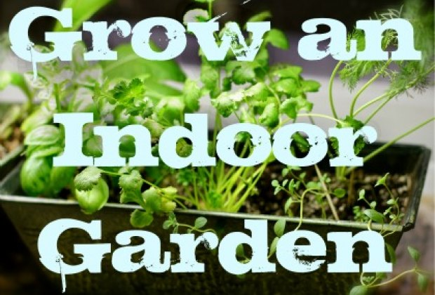 the farm to table movement has become a global concern as we try to reconnect with where our food comes from and increase our support for small local - Indoor Vegetable Garden Kit