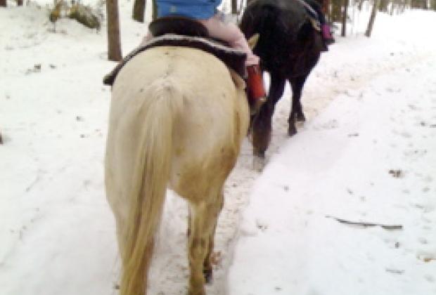 All Inclusive Winter Family Resorts Ridin Hy Ranch