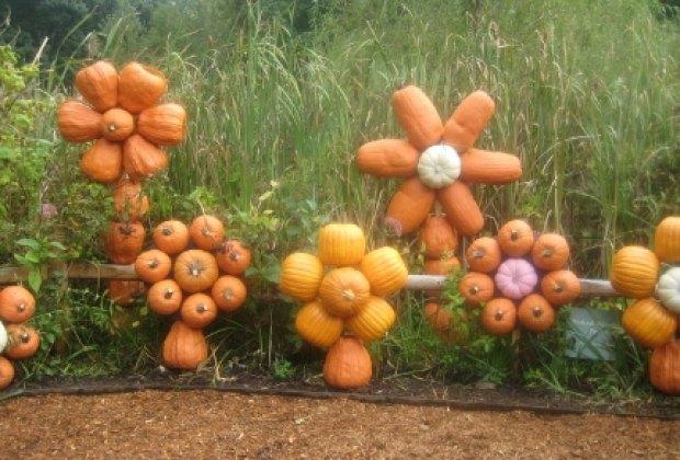 A pretty pumpkin patch