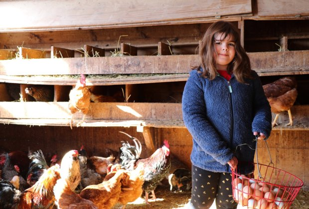 Collect eggs, or just visit with the animals, during your farm stay. Photo by the author