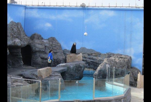 A fun sea lion show