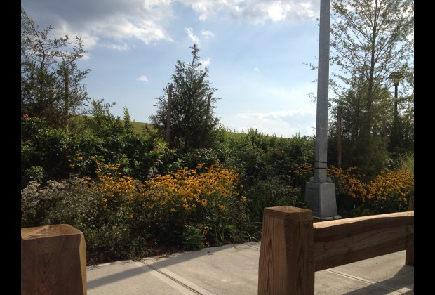 Lovely plantings and greenery, a rare sight in Rockaway