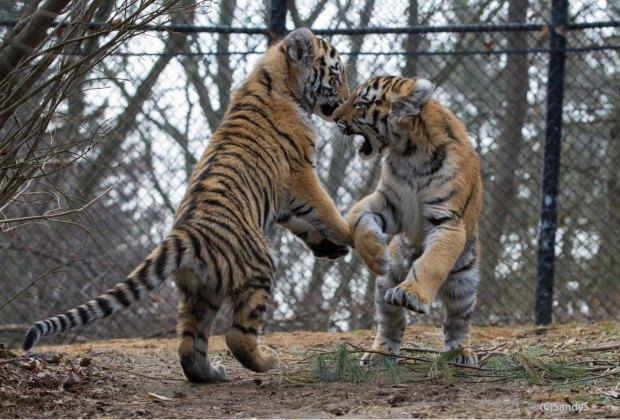 Photo Courtesy of Beardsley Zoo
