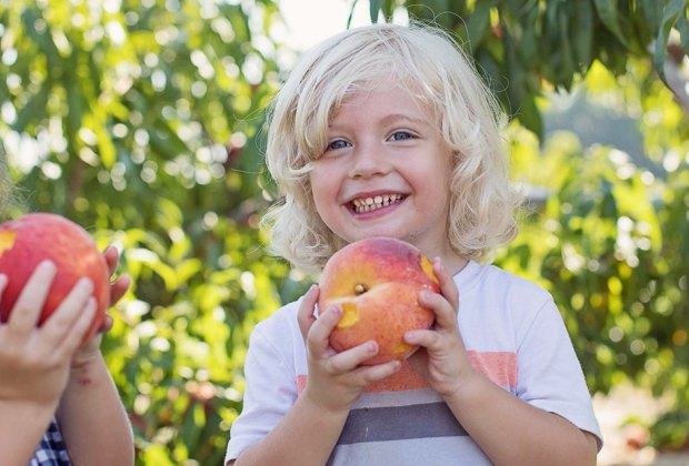 Fresh-picked peaches are one of the greatest pleasures of summer. Photo Courtesy of Johnson's Corner Farm
