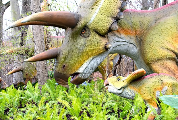 Dinosaur Safari opens April 19th at the Bronx Zoo. Photo by Julie Larsen Maher for WCS