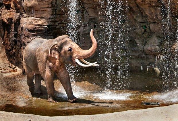 Meet the elephants at the LA Zoo. Photo by Jamie Pham