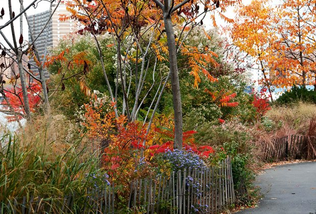 Head to Brooklyn Bridge Park to see vibrant fall colors and hit the playgrounds.