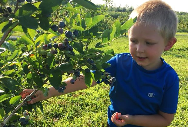 Come July, farm-fresh blueberries are ready for picking at Windy Acres Farm.